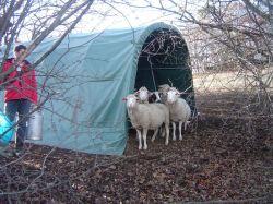Weidezelt für Schafe