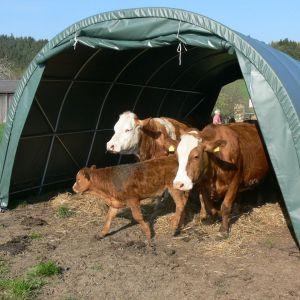 Weidezelt für Rinder