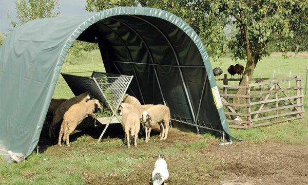 Weidezelt mit Schafen und Futterstelle